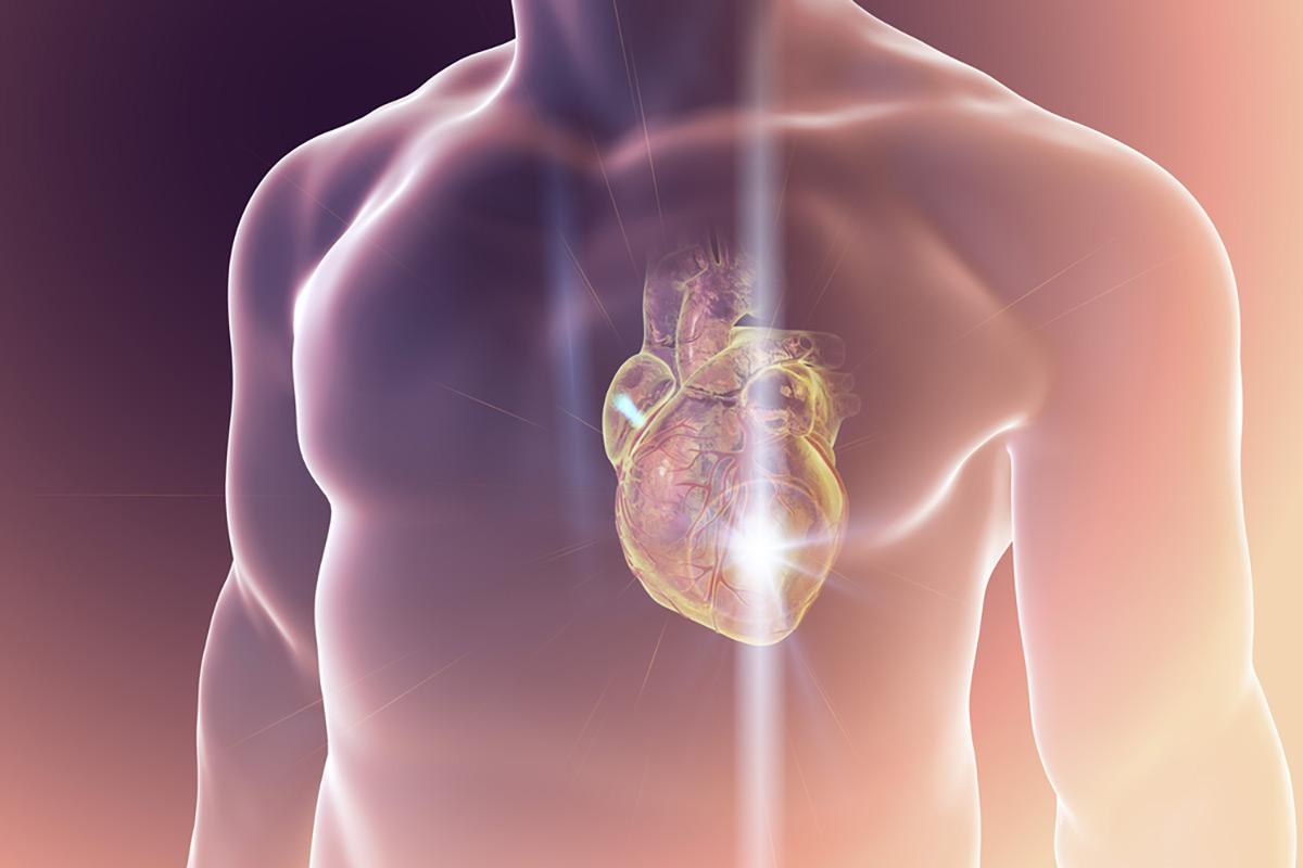 Visualisierung Herz